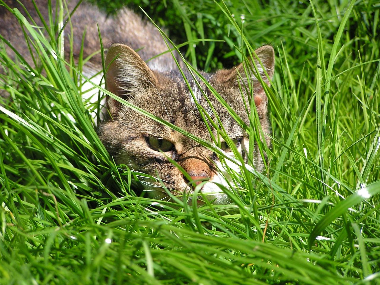 Cat-866645 1280.jpg